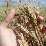 Организация продаж – основная проблема фермерства