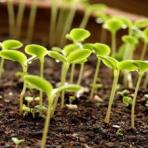 Фосфорные удобрения и здоровье растений